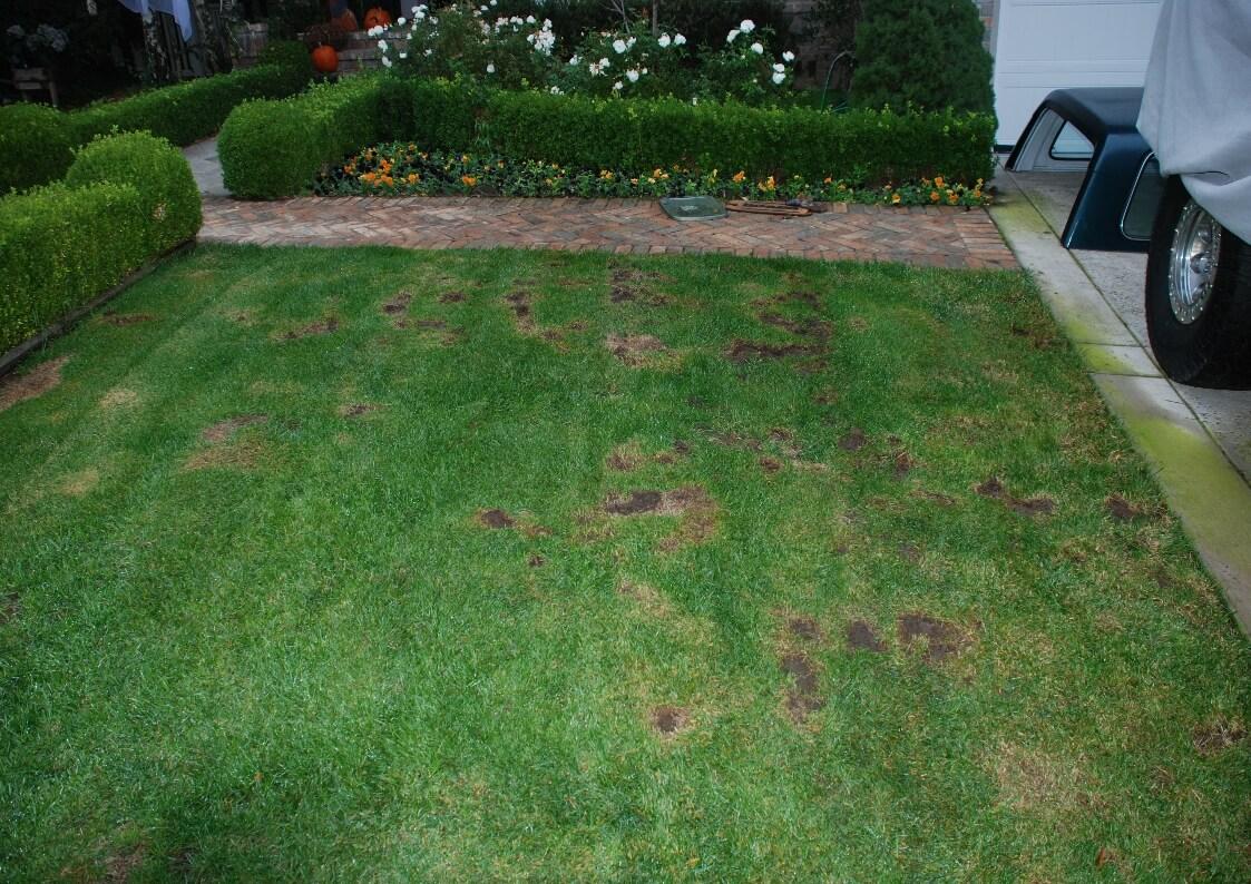 termite control gold coast image 2