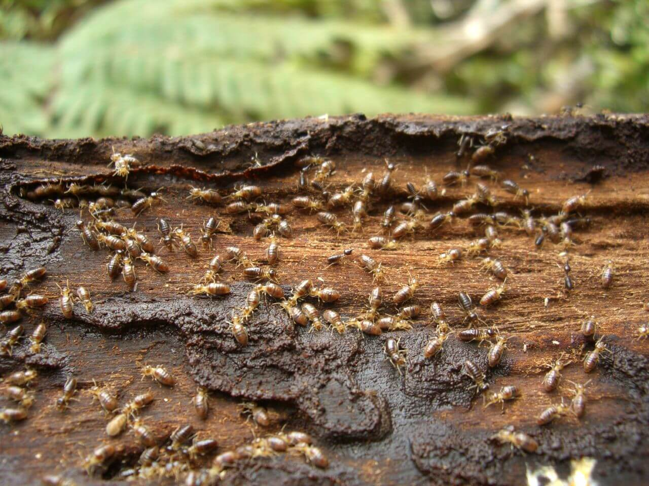 termite control gold coast image 21