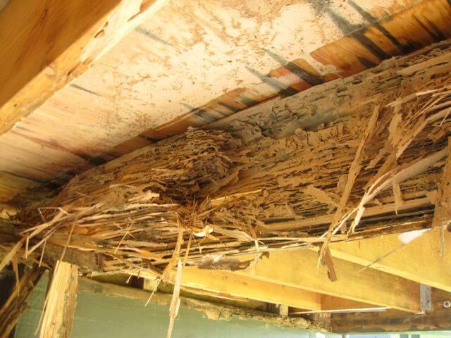 termite control gold coast image 22