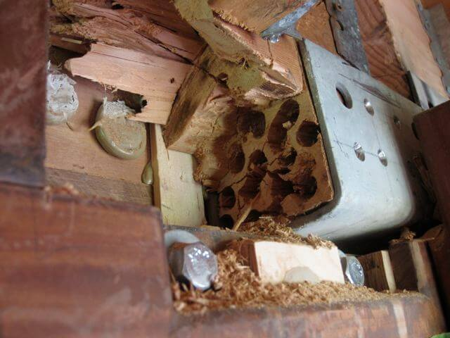 termite control gold coast image 23