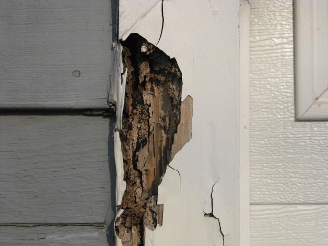 termite control gold coast image 8