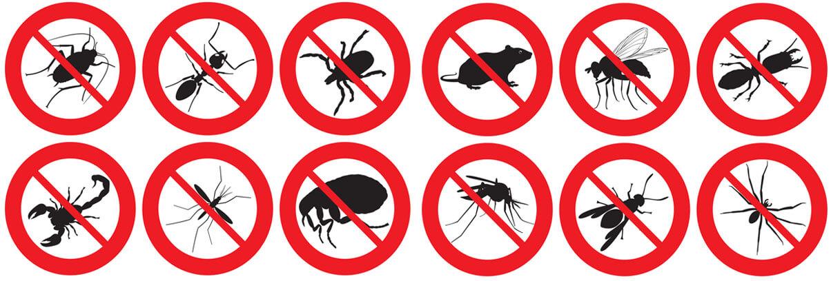 termite control gold coast image 81