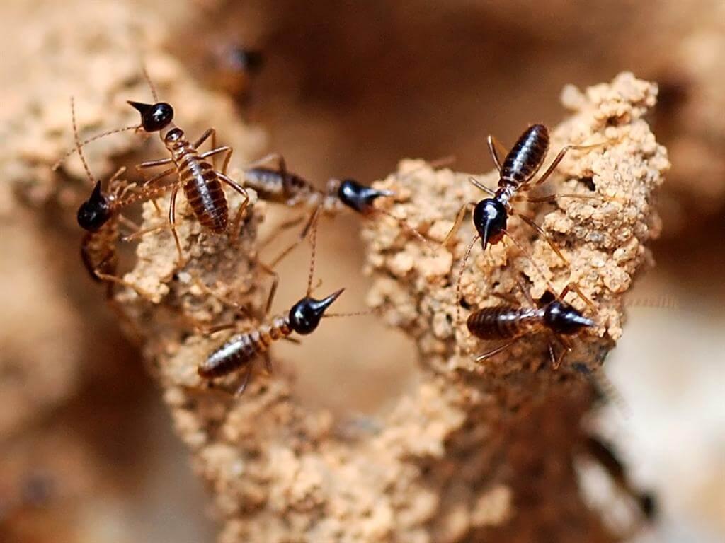 termite control image 4