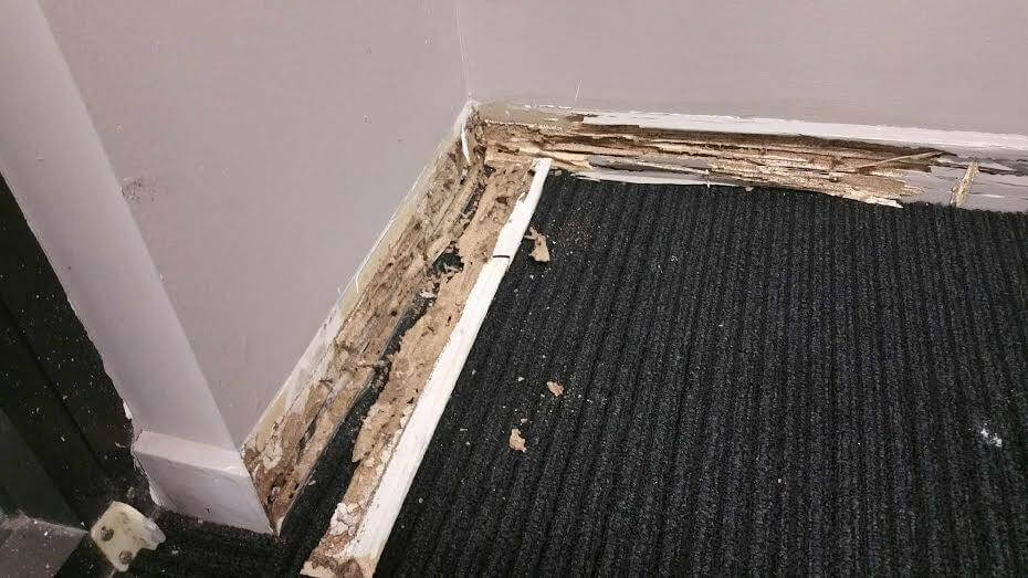 termite controller gold coast image 12