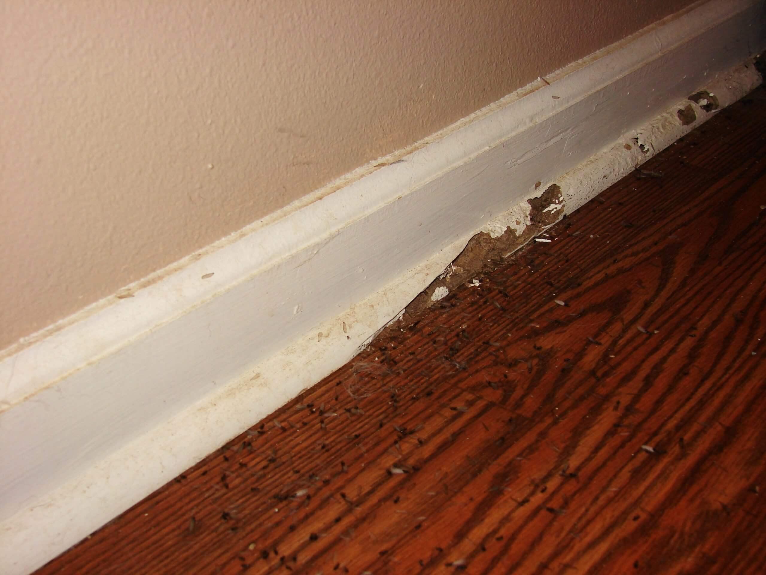 termite controller gold coast image 31