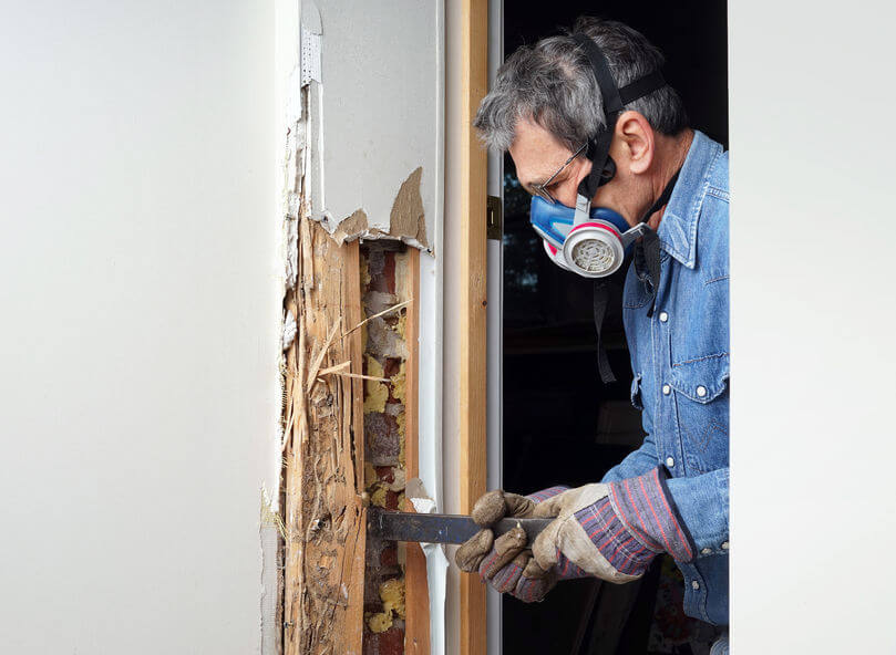 Benefits of Home Termite Inspections