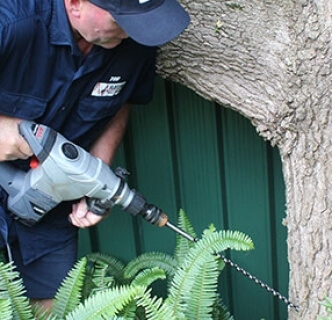 How to Prevent Termites on the Gold Coast