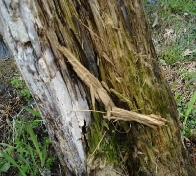 termite control image-10