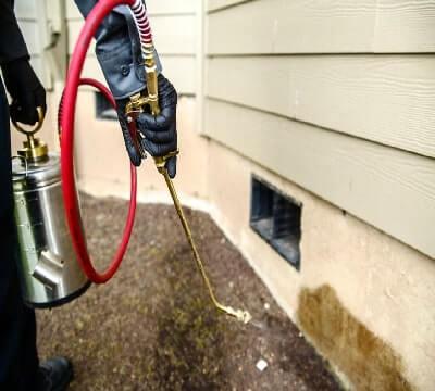 termite control image-123214