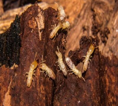 termite control image-7