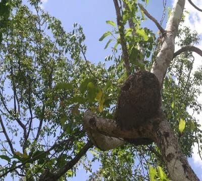 termite control image-9-1